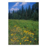 Wildflower Meadow and Spruce Forest, Vermont Greeting Cards