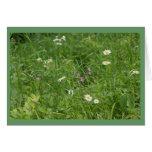 Wildflower Meadow Greeting Cards