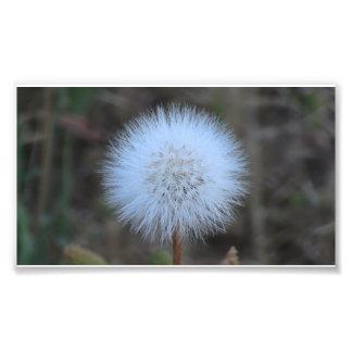 Wildflower negro de la botánica de la flor de la f impresión fotográfica