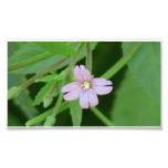 Wildflower negro de la botánica de la flor de la f arte con fotos