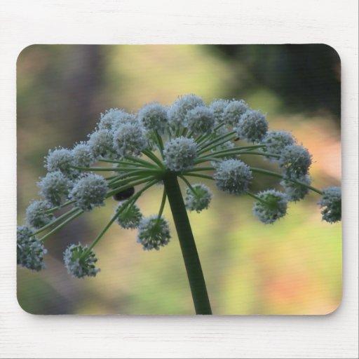 Wildflower negro de la botánica de la flor de la f alfombrilla de ratones