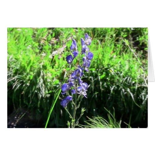 Wildflower negro de la botánica de la flor de la f tarjetas