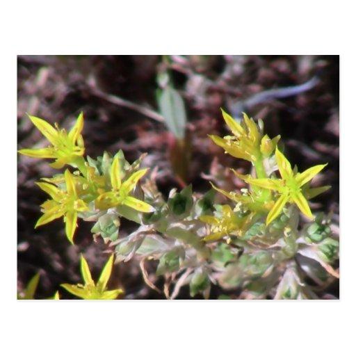 Wildflower negro de la botánica de la flor de la f tarjeta postal