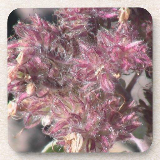 Wildflower negro de la botánica de la flor de la posavaso