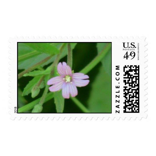 Wildflower negro de la botánica de la flor de la franqueo