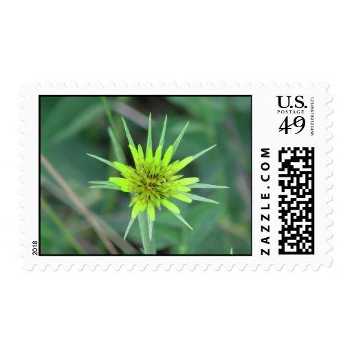 Wildflower negro de la botánica de la flor de la sellos