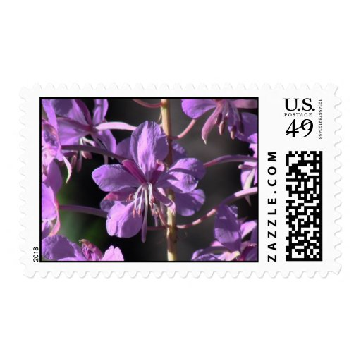 Wildflower negro de la botánica de la flor de la sello