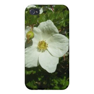 Wildflower of Colorado Rockies iPhone 4/4S Covers
