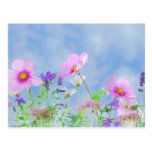 Wildflower Postcard
