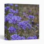 Wildflower púrpura