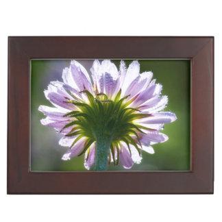 Wildflower púrpura retroiluminado con las gotas de cajas de recuerdos
