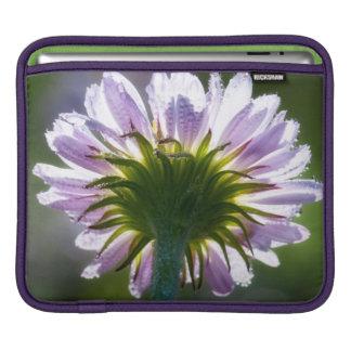 Wildflower púrpura retroiluminado con las gotas de fundas para iPads