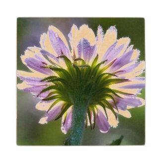 Wildflower púrpura retroiluminado con las gotas de