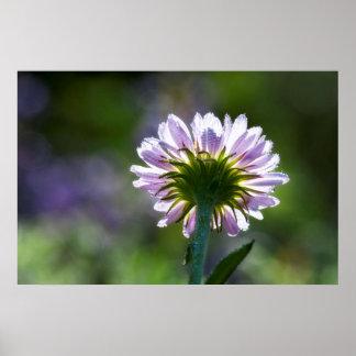 Wildflower púrpura retroiluminado con las gotas de poster