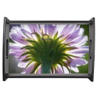 Wildflower púrpura retroiluminado con las gotas de bandejas