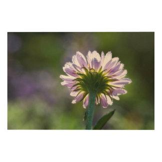 Wildflower púrpura retroiluminado con las gotas de cuadro de madera