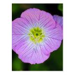 Wildflower púrpura tarjetas postales