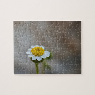 Wildflower Puzzle 5