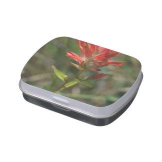 Wildflower rojo de punta latas de caramelos