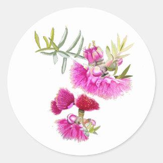 Wildflower rosado australiano de la flor de Gumnut Pegatina Redonda