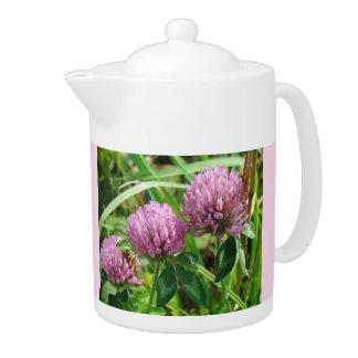 Wildflower rosado del trébol - pratense del Trifol