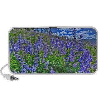Wildflower scenic speaker