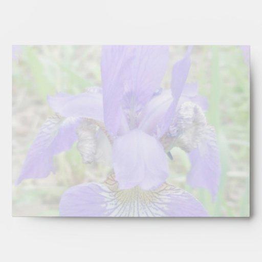 Wildflower siberiano del iris - sibirica del iris