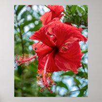 Wildflower Stamen // Red Flower Bloom
