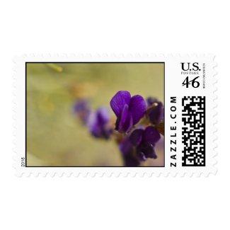 Wildflower Stamp 2 stamp