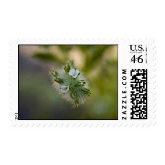 Wildflower Stamp 4 stamp