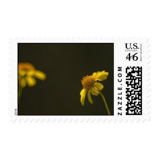 Wildflower Stamp 5 stamp