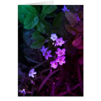 Wildflower Tarjetón