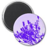 Wildflower violeta iman