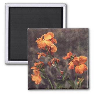 Wildflower: Wallflower Fridge Magnets