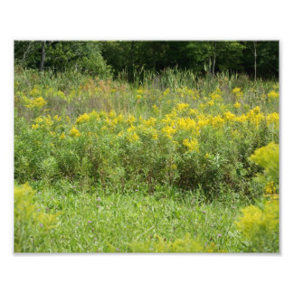 Wildflower Weeds 10 x 8 Photographic Print