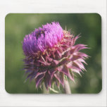 Wildflower Wild Thistle Flower Purple Oklahoma Mouse Mat