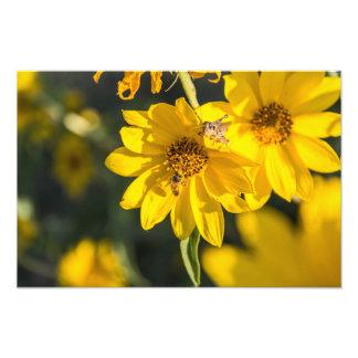 Wildflower y abeja arte fotográfico