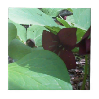 Wildflower y verdor del Trillium púrpura Azulejo Cuadrado Pequeño