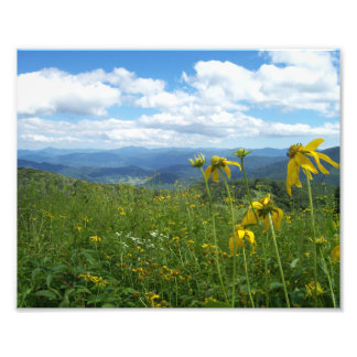 Wildflowers, 10x8 Print + More Sizes Available Photo Print
