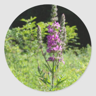 Wildflowers 1 classic round sticker