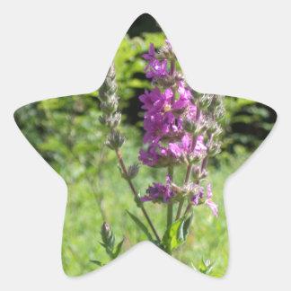 Wildflowers 1 star sticker