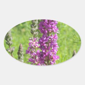 Wildflowers 2 oval sticker
