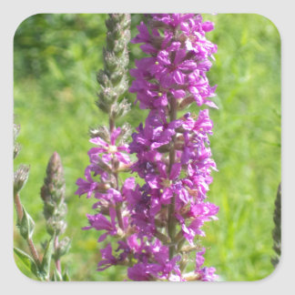 Wildflowers 2 square sticker