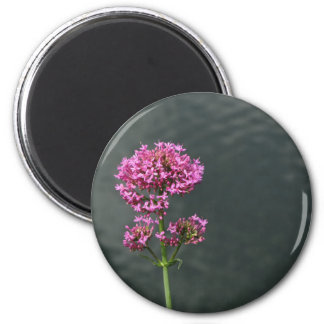 Wildflowers against the water surface of a river magnet