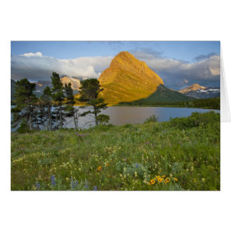 Wildflowers along Swiftcurrent Lake in the Many Card