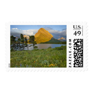Wildflowers along Swiftcurrent Lake in the Many Postage Stamp