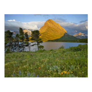 Wildflowers along Swiftcurrent Lake in the Many Postcard