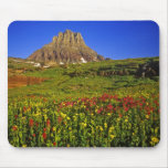 Wildflowers alpinos en el paso de Logan en glaciar Alfombrilla De Ratón