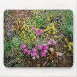 Wildflowers alpinos tapetes de raton
