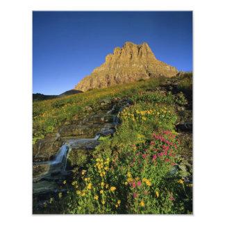 Wildflowers alpinos y Mt Clements en el paso de Lo Fotografía